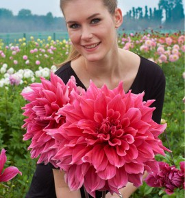 DAHLIA ORIGINAL DECORATIF EMORY PAUL