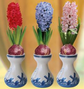 COLIBRIANT 3 JACINTHES ET 3 VASES : 1 ROUGE + 1 BLEUE CLAIR + 1 ROSE CLAIR