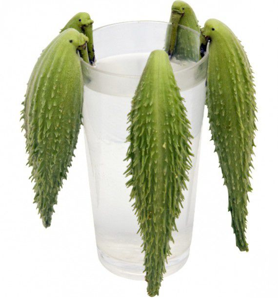 Asclepia cornuti jacques briant plante en ligne for Briant plantes