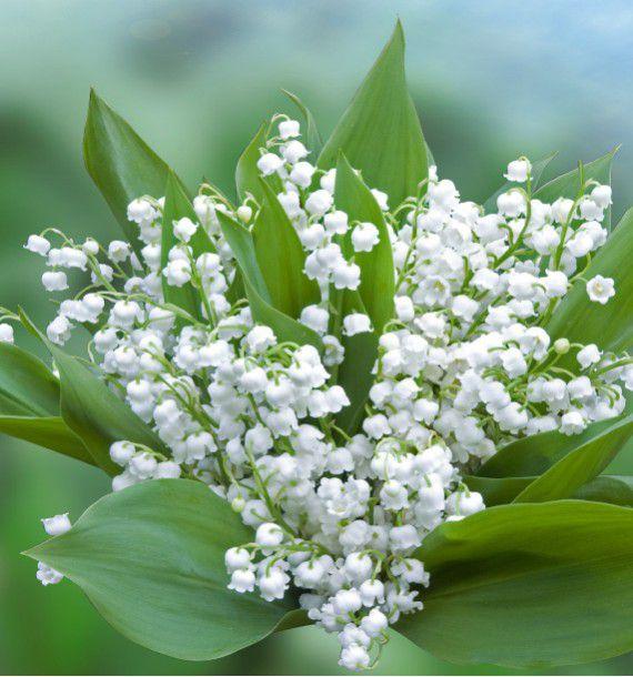 Arbustes decoration jardin haie fond jardin avec for Plante en ligne