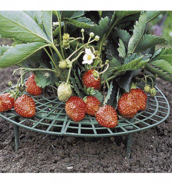 collerettes pour fraisiers plante en ligne. Black Bedroom Furniture Sets. Home Design Ideas