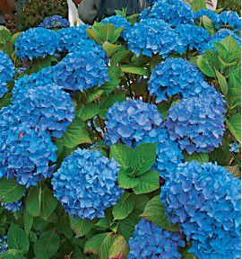 HORTENSIA RENATE STEININGER