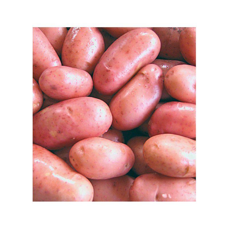 Pomme de terre a peau rose - Variete pomme de terre rouge ...