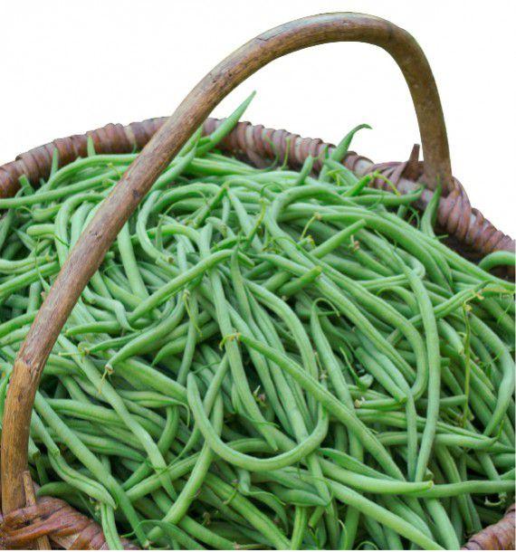 Haricot nain mangetout argus plante en ligne - Haricot mange tout ...