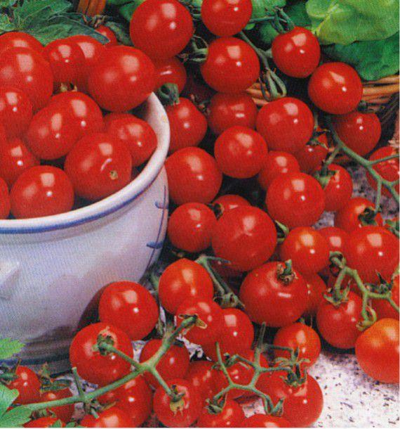 tomate cerise sweet 100 plante en ligne. Black Bedroom Furniture Sets. Home Design Ideas