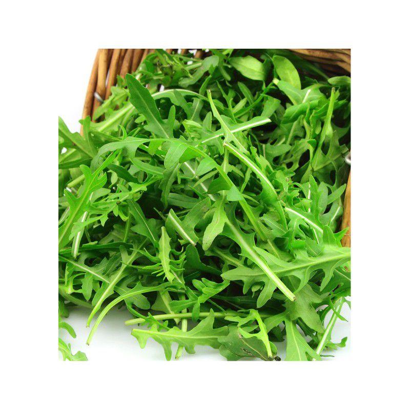 Roquette cultivee jacques briant plante en ligne for Briant plantes
