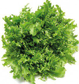 Ceanothus repens plante en ligne - Salade reine des glaces ...