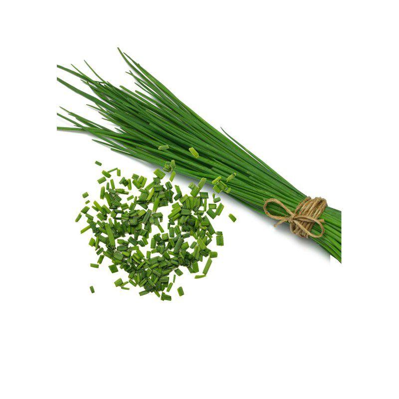 Ciboulette plante en ligne for Plante en ligne