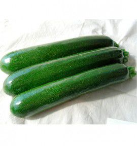 COURGETTE HYB F1 PIXAR