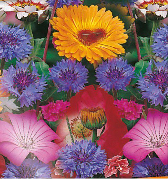 Tapis de fleurs colorees plante en ligne - Tapis chauffant pour plante ...