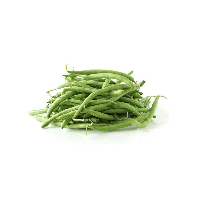 Haricot nain a filets novirex plante en ligne - Planter des haricots nains ...