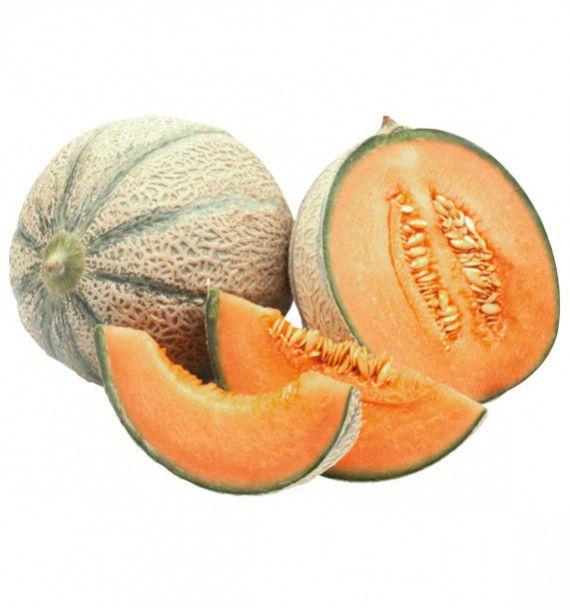 melon stellio plante en ligne