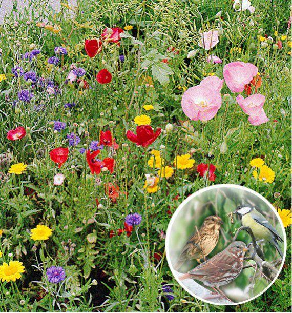 Fleurs pour oiseaux en melange jacques briant plante en ligne for Ligne de plantes