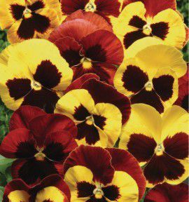 PENSEE MATRIX® AUTUMN BLAZE