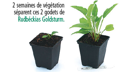 plante petite