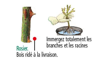 plante sèhe