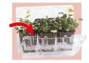 déballer les plantes