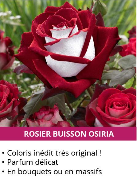 rosier-osiria.png