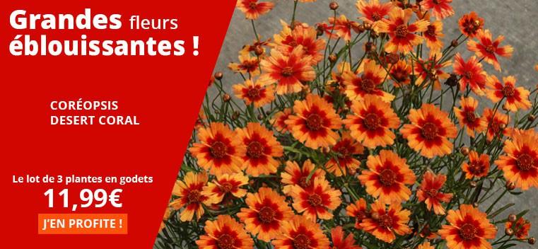 Grandes fleurs éblouissantes !