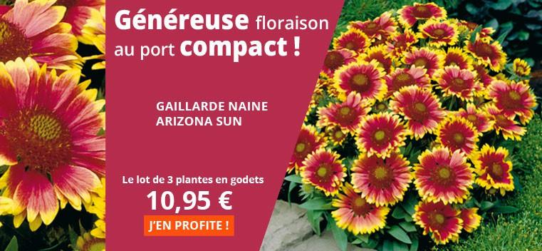 Généreuse floraison au port compact !
