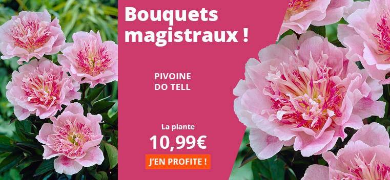 Bouquets magistraux !
