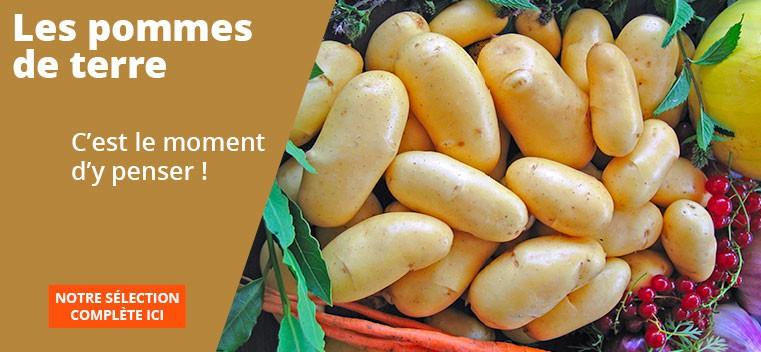 Les pommes de terre, c'est le moment d'y penser !
