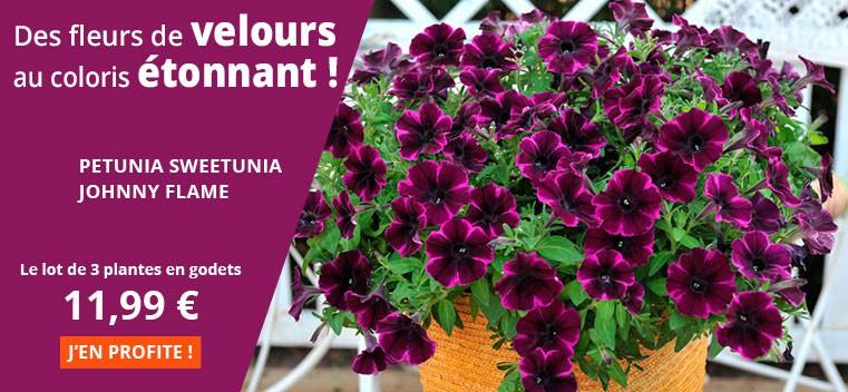 Des fleurs de velours au coloris étonnant !