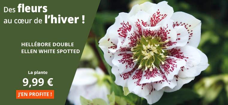 Des fleurs au cœur de l'hiver !