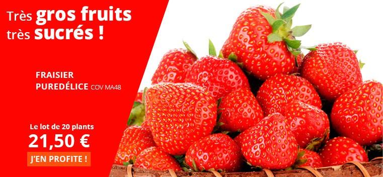 Ses gros fruits sucrés et savoureux font l'unanimité !