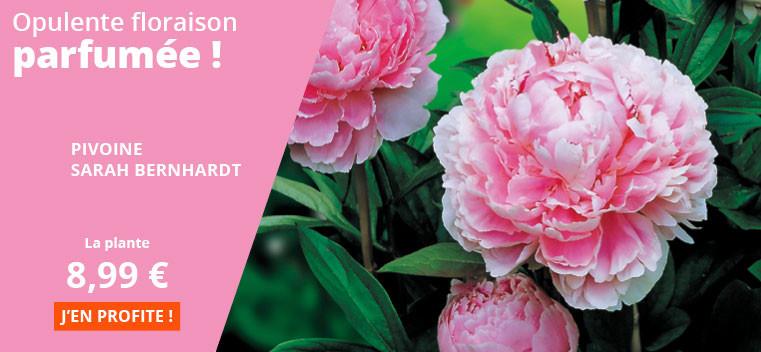 Opulente floraison parfumée !