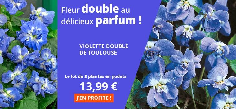 Fleur double au délicieux parfum !