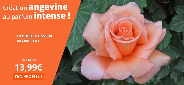 Création angevine au parfum intense !