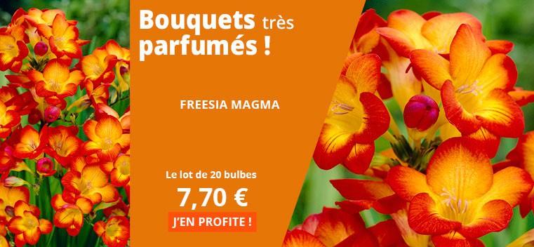 Bouquets très parfumés !