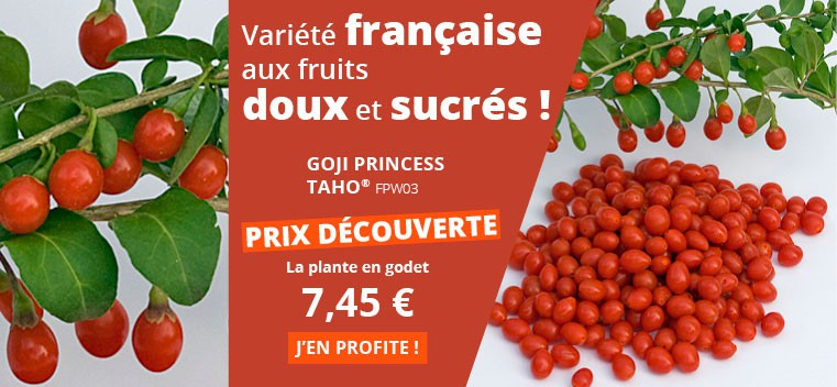 Nouvelle variété française aux gros fruits doux et sucrés !