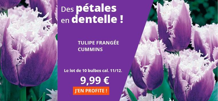 """La tulipe """"Frou Frou"""" !"""