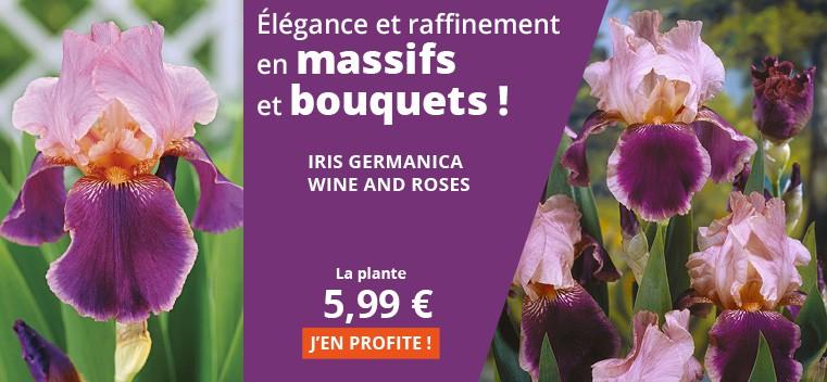 Elegance et raffinement en massifs et bouquets !