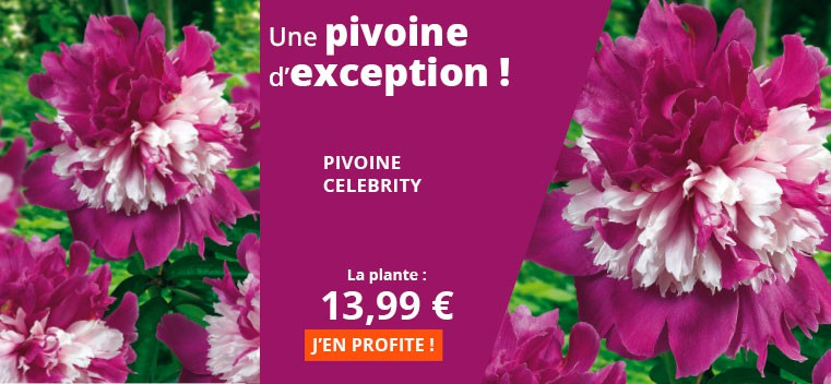 Une pivoine d'exception !
