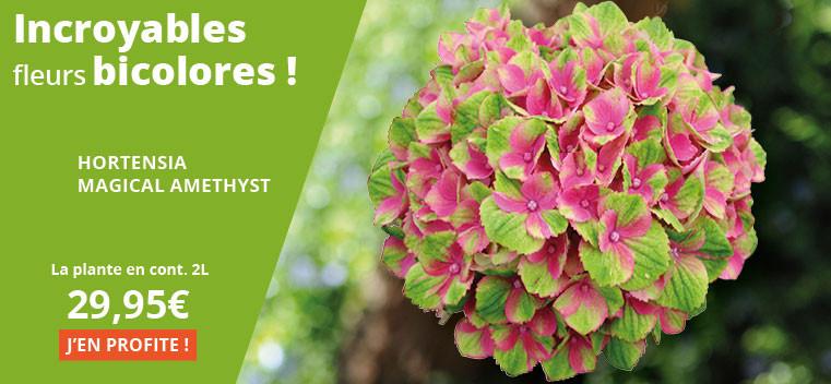Incroyables fleurs bicolores !