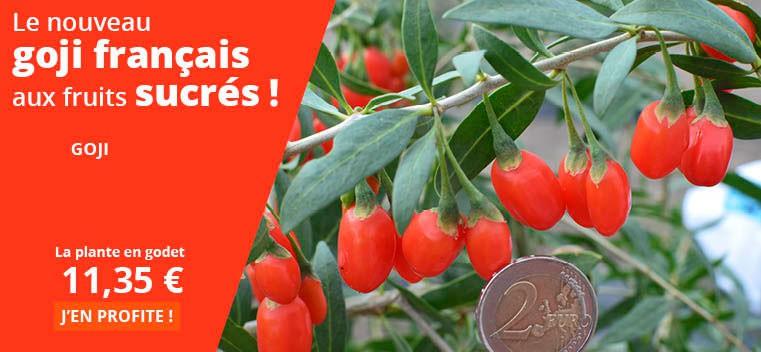 Le nouveau Goji français aux fruits sucrés !