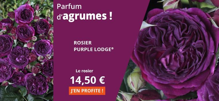 Parfum d'agrumes !