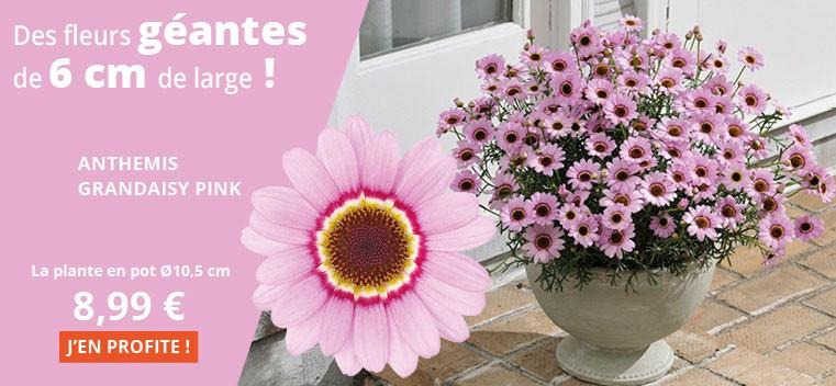Des fleurs géantes de 6 cm de large !