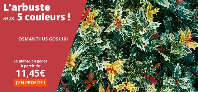 L'arbuste aux 5 couleurs !