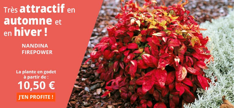 Très attractif en automne et en hiver !