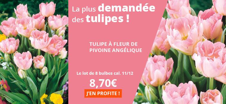 La plus demandée des tulipes !