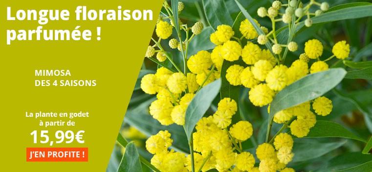 Longue floraison parfumée !