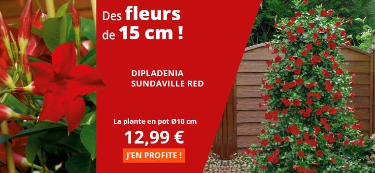 Des fleurs de 15 cm !