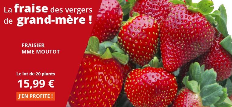 La fraise des vergers de grand-mère !
